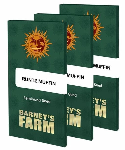 buy runtz muffin seeds